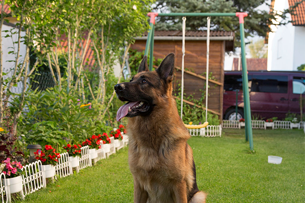 A Dog to Watch out for Garden