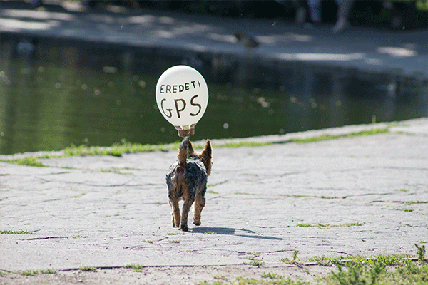 GPS Device to Locate Your Pet