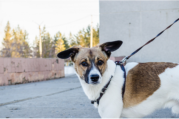 Dogs to Watch Out for Your Single-Family Home Construction Sites