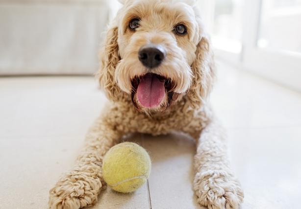 Ball for Dog
