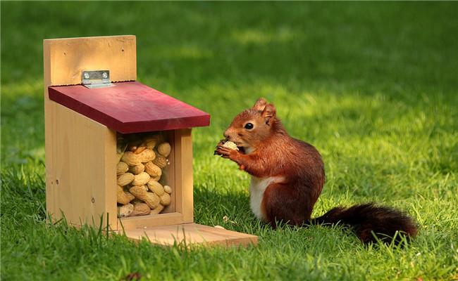 Scare Off Squirrels