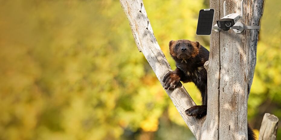 Reolink Go 4G Security Camera Helps Observe Wild Lives