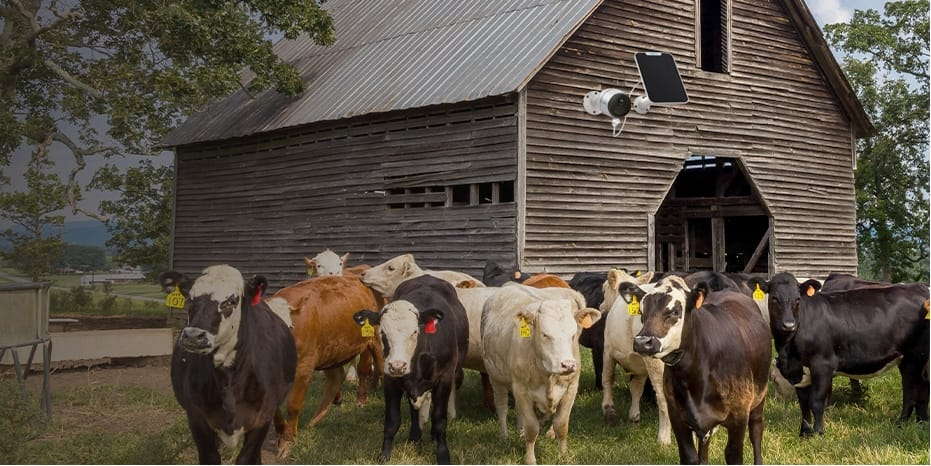 Reolink Go Plus Farm Security Camera Monitors Farm