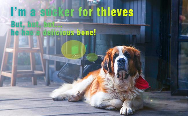 Will Dog Prevent Daytime Burglary