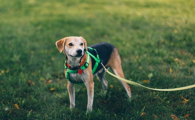 Keep Dogs On Leash