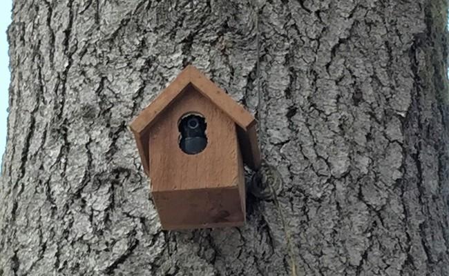 Security Camera Hidden in a Bird House