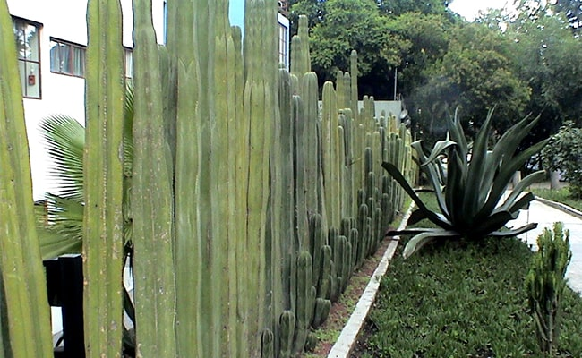 Natural Fence to Keep Kids out of Your Yard