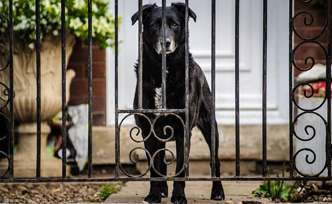Watchdog to Secure Your Yard