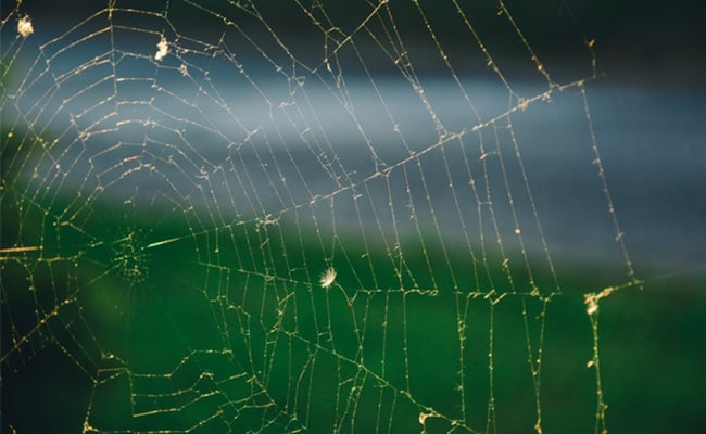 Spider Web Ruins Outdoor Security Surveillance