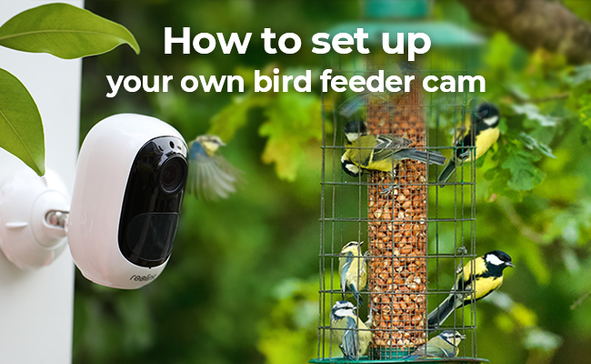 The Complate Guide For Setting Up Your Own Bird Feeder Cam