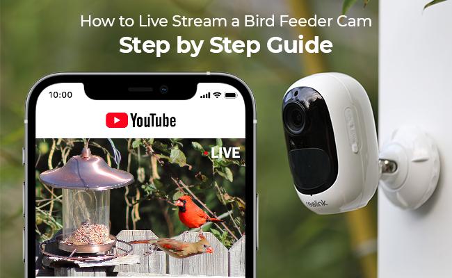 How to Live Stream a Bird Feeder Cam, Step by Step Guide